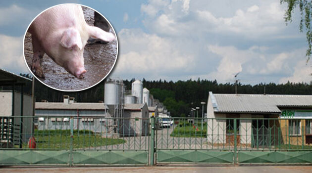 The pig farm at Lety by Písek, Czech Republic, on the site of a former concentration camp for Romani prisoners. (PHOTO:  Archive Romea.cz)
